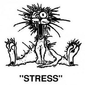 Частый стресс - проблема не имеющая дна.