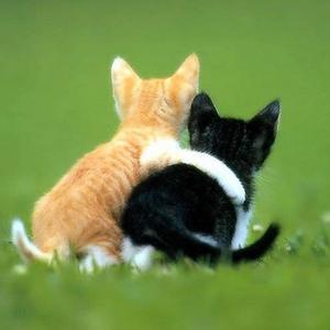 Стань себе другом.